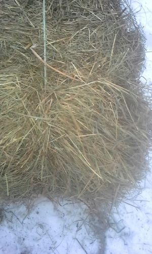 Hay For Sale ( Bales )